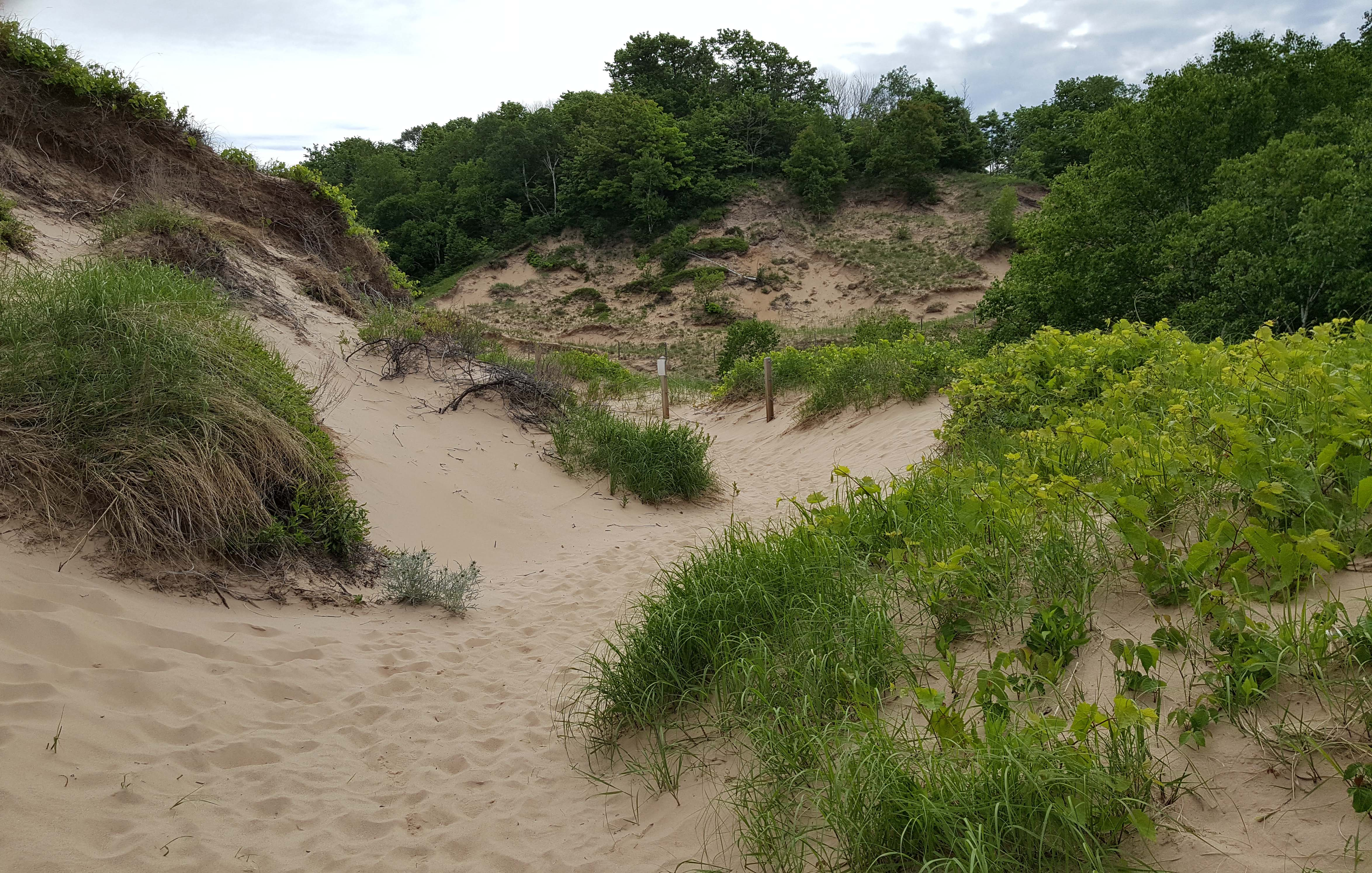 Paths through the Ever-Changing Dunes